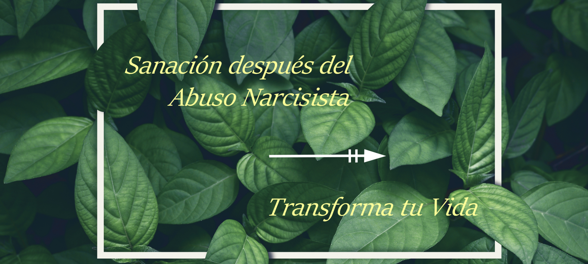 Narcisistas, Codependientes e Inteligencia Emocional